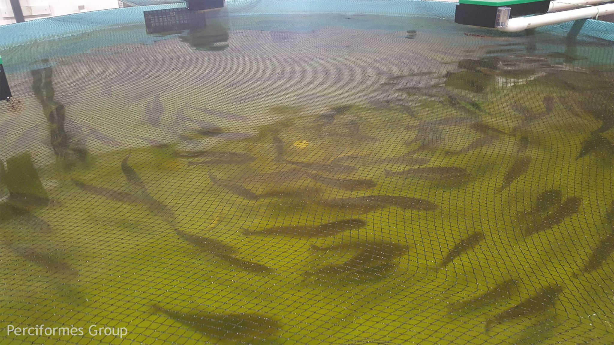 The Need for Aquaculture